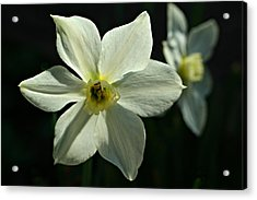 Spring Perennial Acrylic Print
