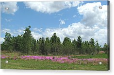 Acrylic Print featuring the photograph Spring Phlox by Peg Urban
