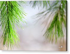 Acrylic Print featuring the photograph Spring Pine Abstract by Christina Rollo