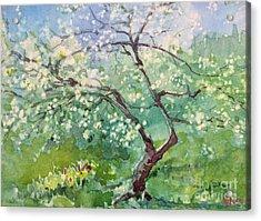 Spring Plum Acrylic Print by Elizabeth Carr