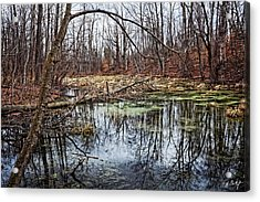 Spring Pond Acrylic Print by Phill Doherty