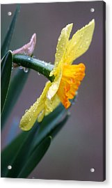 Spring Rain Acrylic Print by Linda Russell