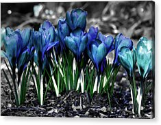 Acrylic Print featuring the photograph Spring Rebirth by Shelley Neff
