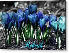 Acrylic Print featuring the photograph Spring Rebirth - Text by Shelley Neff
