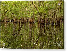 Spring Reflections At Manatee Springs Acrylic Print by Adam Jewell