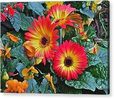 Spring Show 14 Gerbera Daisy 1 Acrylic Print