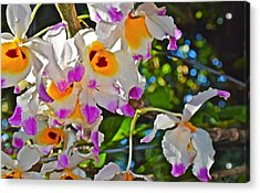 Spring Show 15 Brazilian Orchid Acrylic Print