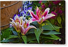 Spring Show 15 Lily Trio Acrylic Print by Janis Nussbaum Senungetuk