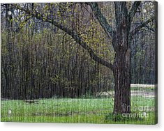 Spring Shower Acrylic Print
