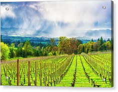 Spring Showers In The Vineyards  Acrylic Print