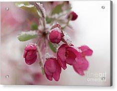 Acrylic Print featuring the photograph Spring Snow by Ana V Ramirez
