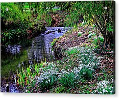Spring Snowdrops By Stream Acrylic Print