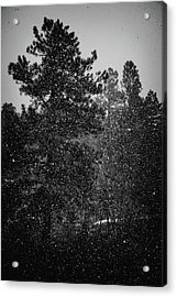 Spring Snowstorm Acrylic Print