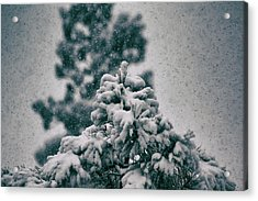 Spring Snowstorm On The Treetops Acrylic Print