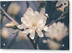 Spring Sonnet Acrylic Print