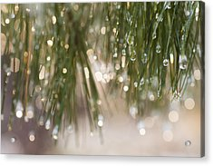 Spring Sparkle Acrylic Print by Sue OConnor