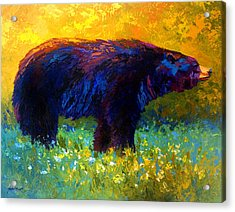 Spring Stroll - Black Bear Acrylic Print by Marion Rose