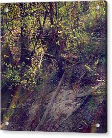 Spring Sun Acrylic Print by Henryk Gorecki