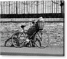Acrylic Print featuring the photograph Spring Sunshine And Shadows In Black And White by Gill Billington