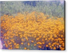 Spring Sunshine Acrylic Print