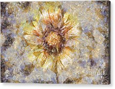 Spring Sunshine Acrylic Print by Shirley Stalter