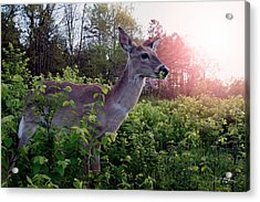 Spring Time Acrylic Print by Bill Stephens