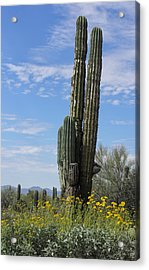 Spring Time In Tucson Acrylic Print