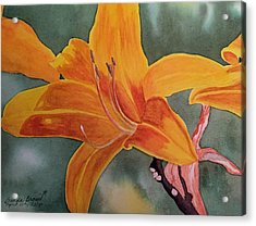 Spring Time Lily Acrylic Print by Brenda Brown