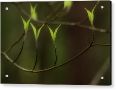 Acrylic Print featuring the photograph Spring Time by Mike Eingle