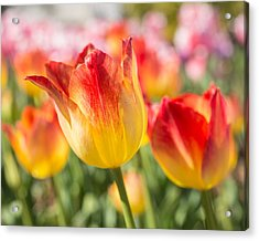 Acrylic Print featuring the photograph Spring Touches My Soul by Julie Andel