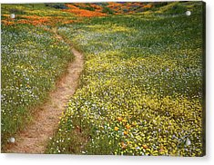 Acrylic Print featuring the photograph Spring Trail Through A Sea Of Wildflowers At Diamond Lake In California by Jetson Nguyen