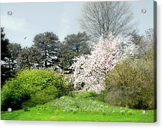 Acrylic Print featuring the photograph Spring Treasures by Diana Angstadt