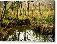 Spring Trees Reflection Acrylic Print by Iris Greenwell