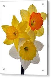 Spring Trio Acrylic Print