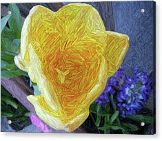 Acrylic Print featuring the photograph Spring Tulip by Susan Carella