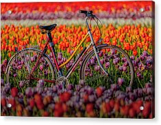 Acrylic Print featuring the photograph Spring Tulips And Bicycle by Susan Candelario