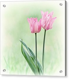 Acrylic Print featuring the photograph Spring Tulips by Angie Vogel