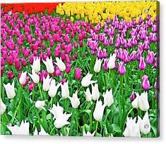 Spring Tulips Flower Field II Acrylic Print by Artecco Fine Art Photography
