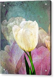 Spring Tulips Acrylic Print by Moon Stumpp
