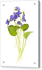 Spring Violets On White Acrylic Print by Elena Elisseeva