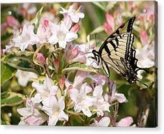 Spring Visit Acrylic Print