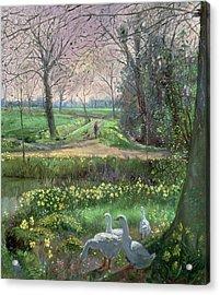 Spring Walk Acrylic Print by Timothy Easton