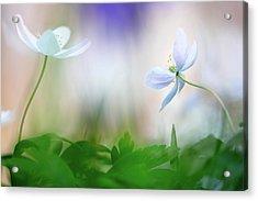 Spring Wild Flower Dance Acrylic Print by Dirk Ercken