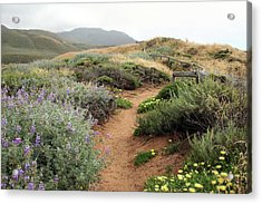 Acrylic Print featuring the photograph Spring Wild Flowers by Michael Rock