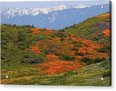 Acrylic Print featuring the photograph Spring Wildflower Display At Diamond Lake In California by Jetson Nguyen