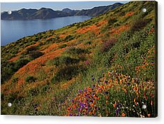 Acrylic Print featuring the photograph Spring Wildflower Season At Diamond Lake In California by Jetson Nguyen