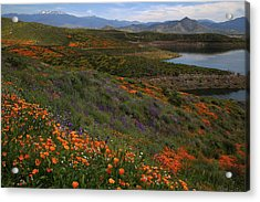 Acrylic Print featuring the photograph Spring Wildflowers At Diamond Lake In California by Jetson Nguyen