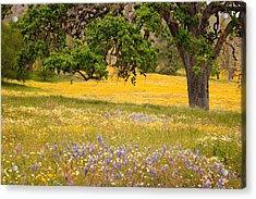Spring Wildflowers Acrylic Print by Carol Leigh