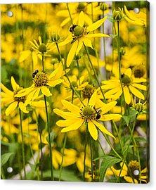 Spring Wildflowers Acrylic Print