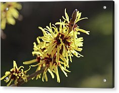 Acrylic Print featuring the photograph Spring by Wilhelm Hufnagl